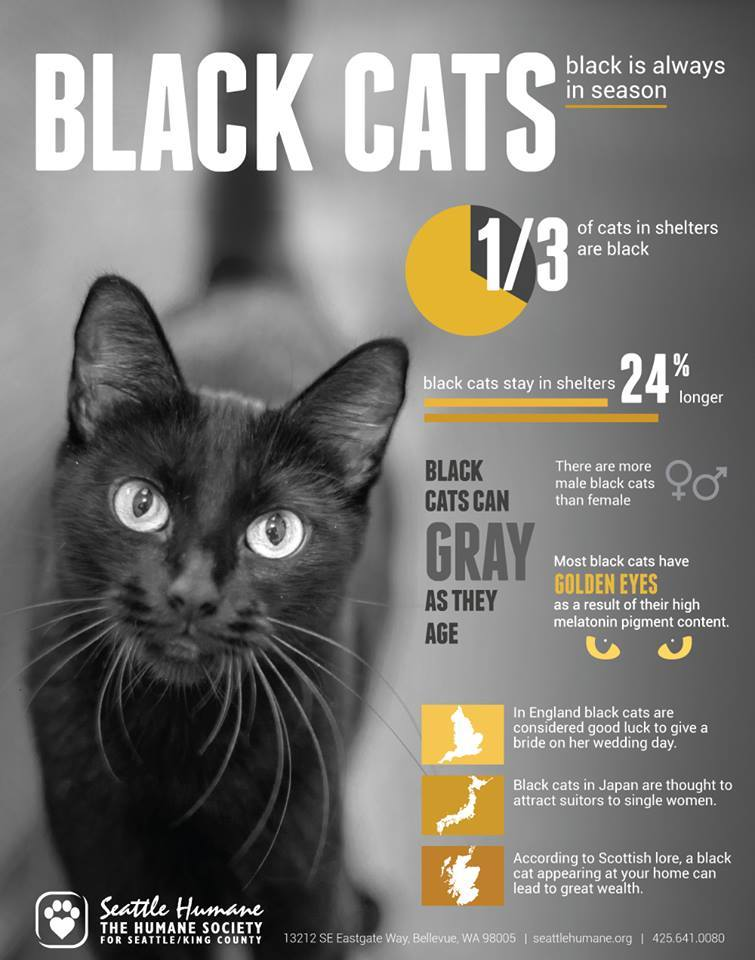 Black Cat Facts